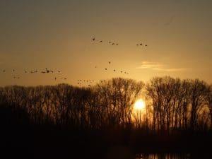 Alle Fotos mit freundlicher Genehmigung von und durch die NABU-Naturschutzstation Niederrhein